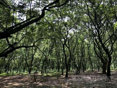 Aarey colony jungle